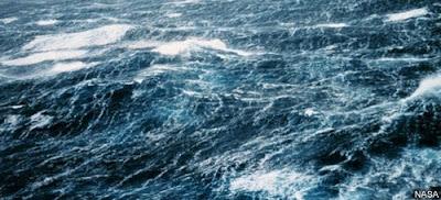 water-buffalo-aerobics-roiling-sea