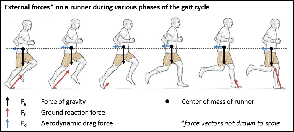 Gait-cycle-free-body-diagram